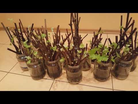 Cortijo la Jara - Visas vynuogių auginimo galimybių kursas profesionalams